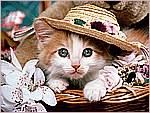Cat Fancy.jpg