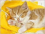 Catnip Dreams.jpg