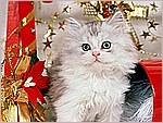 Christmas Kitten.jpg