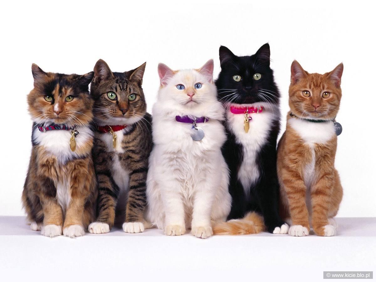 Fancy felines