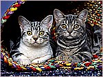 Curious Cats.jpg