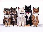 Fancy Felines.jpg
